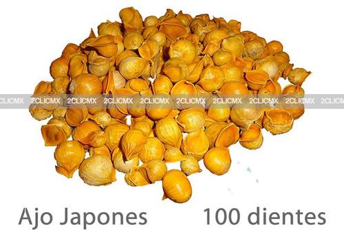 100 ajos ajo japones semilla natural 2clicmx