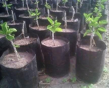 100 bolsas macetas negras nylon vivero plantas arboles 5 for Plantas precios viveros