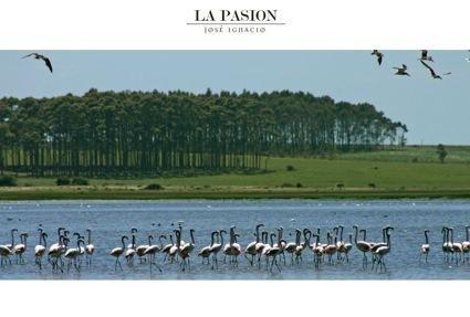 100 hectáreas con 1200 metros de costa de la laguna anastasia, muy especiales!