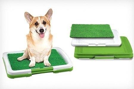 100 pañales sabanillas perro +baño entrenador, envio gratis