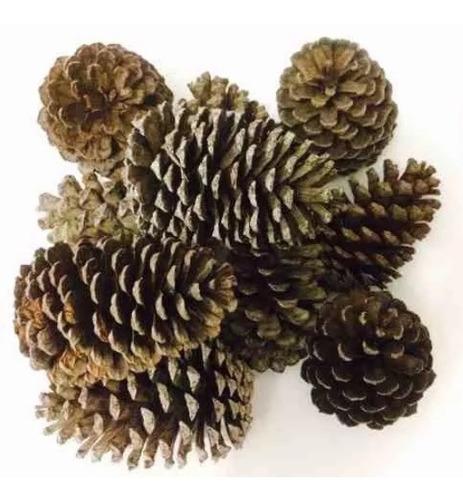 100 pinhas naturais in natura life enfeite natal artesanato oferta festa eventos pinha pinos pino decoração arvore natal