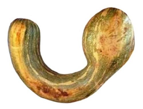 100 sementes da abóbora menina rajada gigante # original