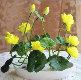 87b0e69dc1 Sementes De Mini Azaleia Amarela no Mercado Livre Brasil