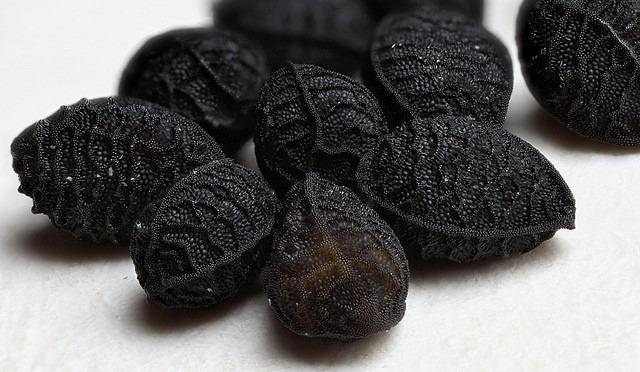 semillas nigella