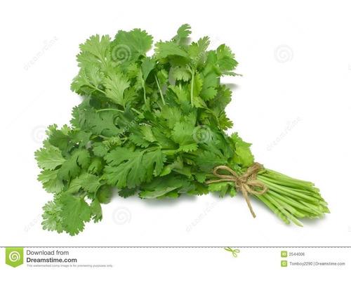 100 semillas de coriandro (cilantro) organicas