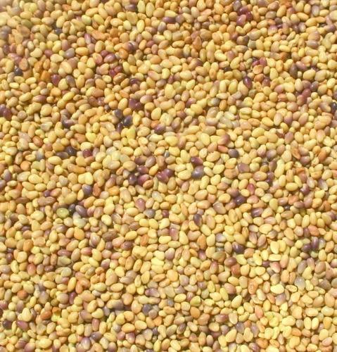 100 semillas de trébol rojo. deja de usar urea