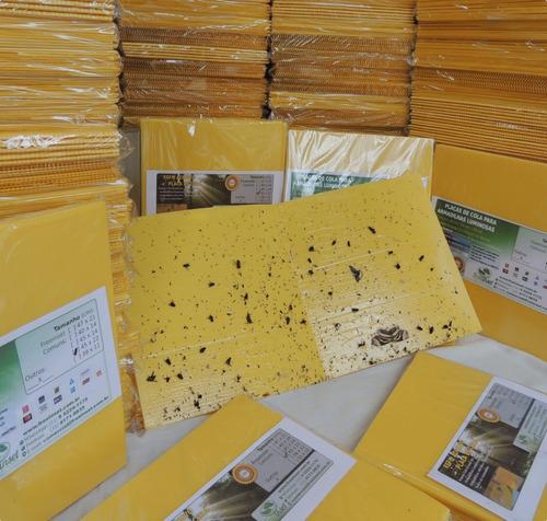 1000 armadilhas adesivos p/ restaurantes matar moscas 47x22