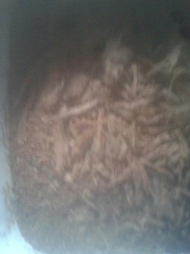 1000 gramas pó casca de jurema preta