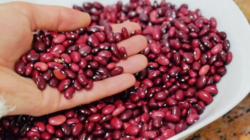 1000 semente p muda feijão roxo sítio fazenda chácara jardim