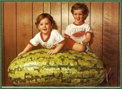 1000 sementes carolina cross melancia guinness # original