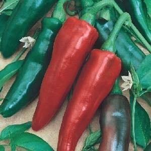 1000 sementes de pimenta doce italiana saborosa  promoção