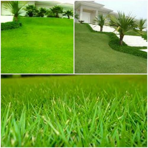 1000 sementes grama esmeralda folha fina gramas jardim vaso