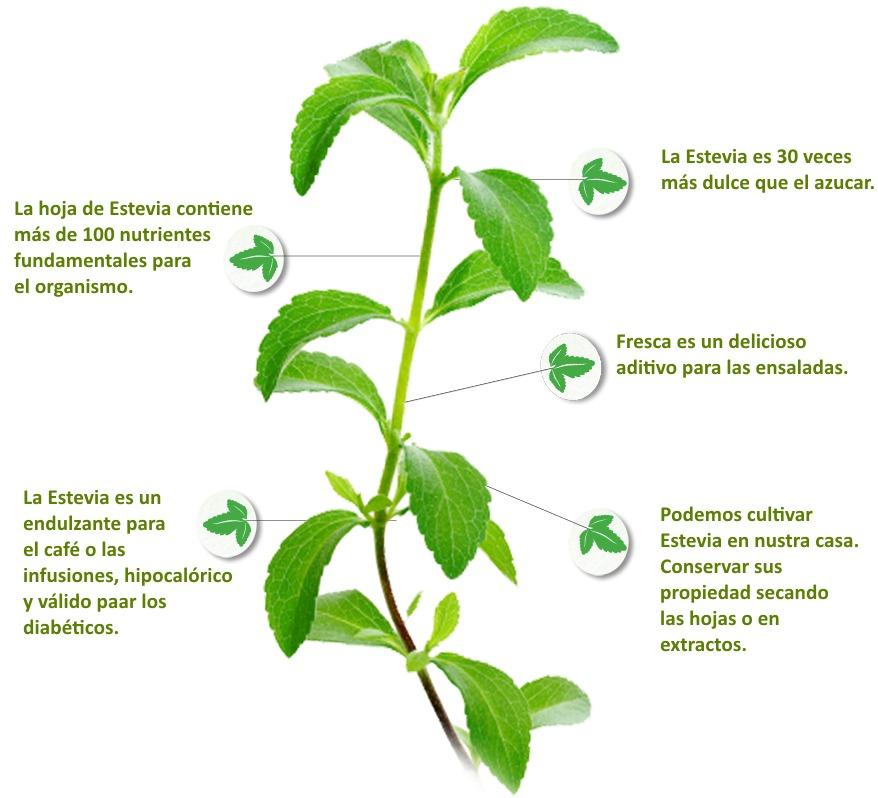 semillas envio gratis