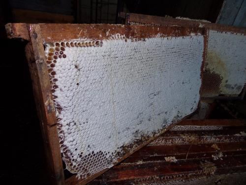 10kg cera estampada apicultura san miguel de celdas de 4,9mm