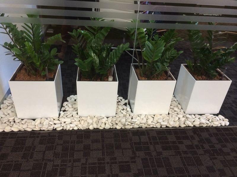 10kg Pedras Para Jardins, Seixo Branco, Decoraç u00e3o Em Vasos R$ 37,90 em Mercado Livre # Decoração De Jardim Com Vasos E Pedras