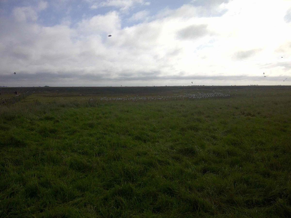 111 hectáreas madariaga