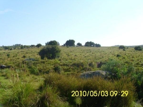 114 hectáreas | campo | ruta 39, km 53