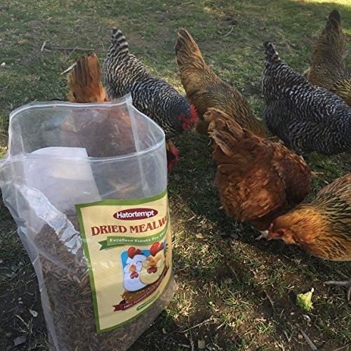 11libras para pollos pájaros salvajes de comida para
