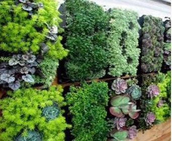 Delectable Garden 12 Pocket Hanging Vertical Garden Wall Planter For