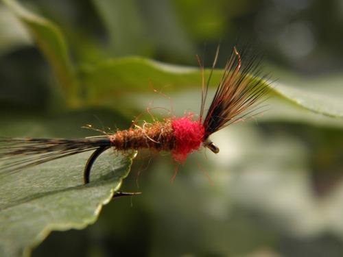 12 moscas secas de selección