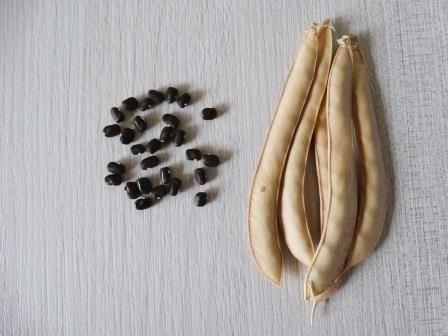 12 sementes de cunhã ou feijão borboleta clitoria ternatea