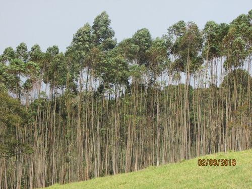 12a   extensa área verde com rica fauna & flora.