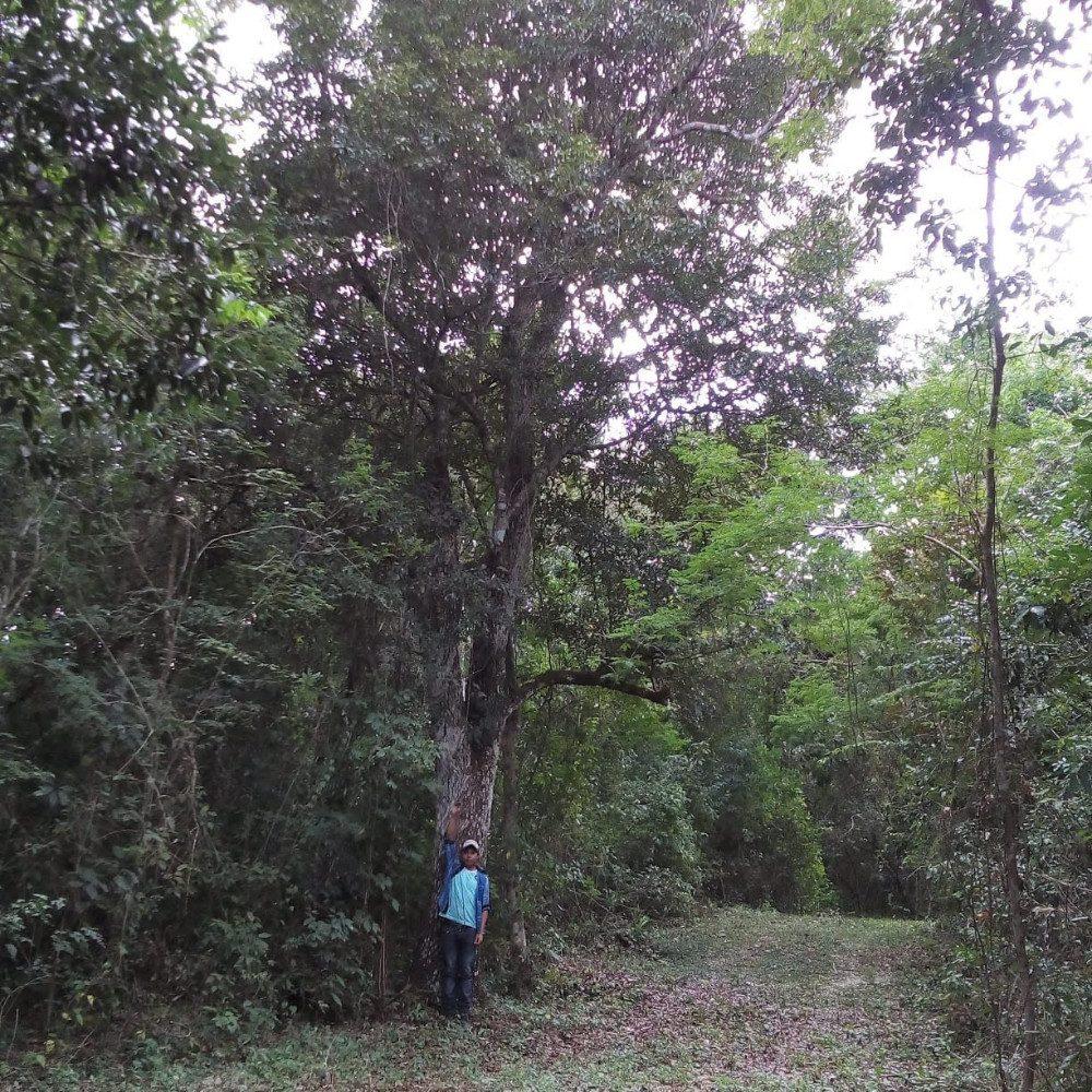 13.5 has. con cenote cielo abierto centrado ambos lados