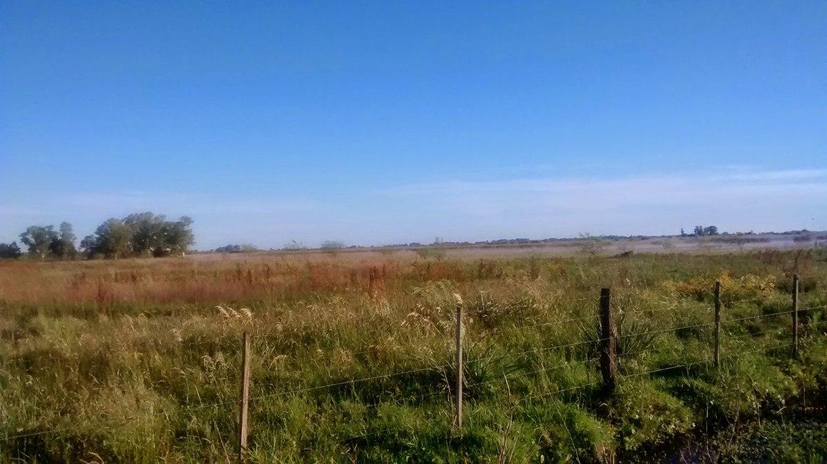 135 hectáreas en lobos.