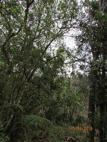 13c  chacrinha em ibiúna - sp