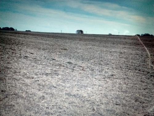147 hectareas de alto rinde agricola