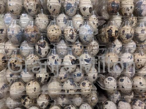 15 docenas huevos fértiles codornices japónicas