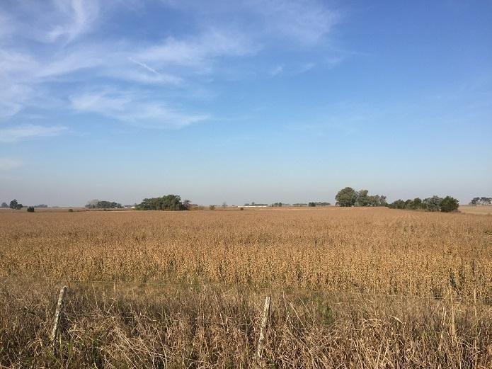 15 hectáreas | campo | san antonio de areco