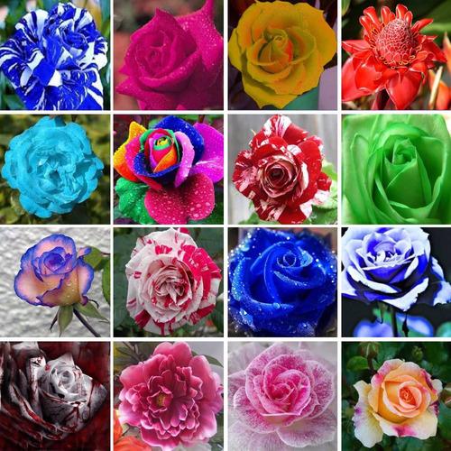 15 sementes rosas cores raras azul, amarela, verde e outras