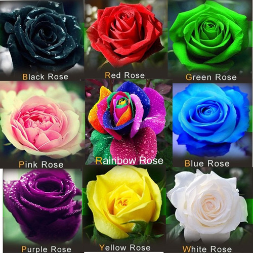 15 sementes rosas mix de cores para mudas frete grátis