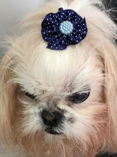 150 kit laços pet shop - edição luxo - cães e gatos + brinde