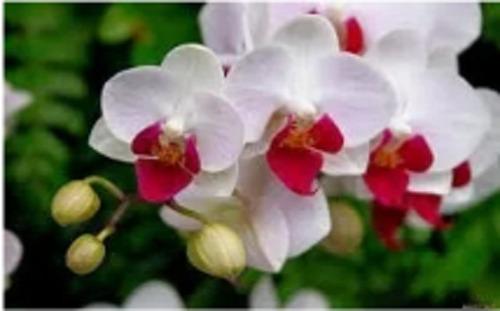 150g  de fertilizante mineral misto para orquídeas !!!!