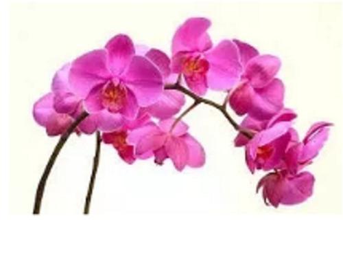150g  de fertilizante mineral misto para orquídeas%$$$$$