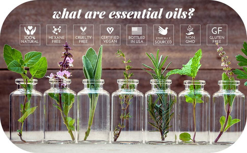 16 + 4 aceites esenciales menta eucalipto lavanda incienso