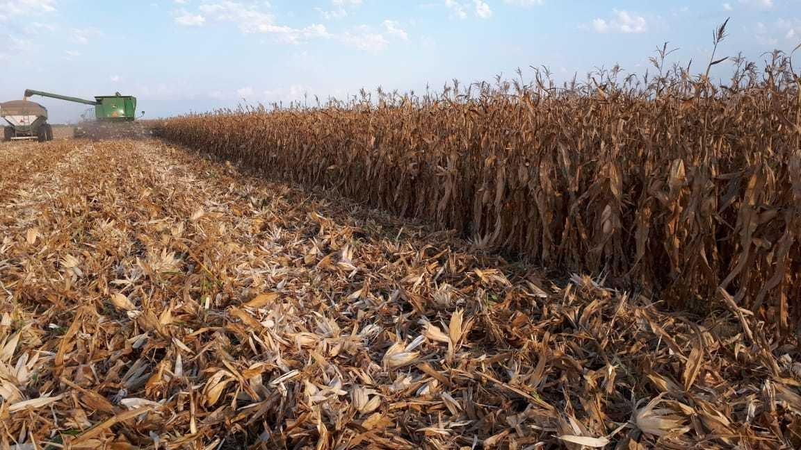 1.610 hectáreas agrícolas ( giradet. santiago del estero )