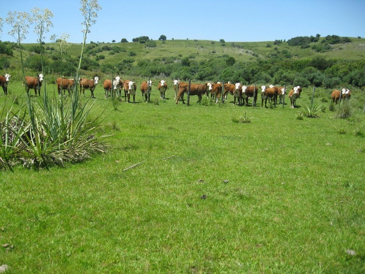 165 hectáreas con casa, galpón, arroyo, instalaciones