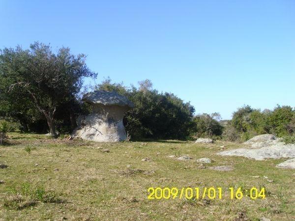 17 hectáreas | campo | ruta 39, km 61