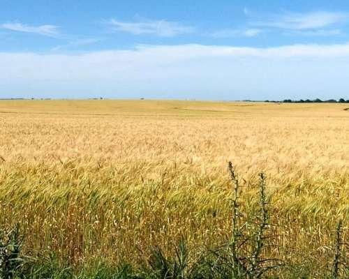 1.700 hectareas agricolas.