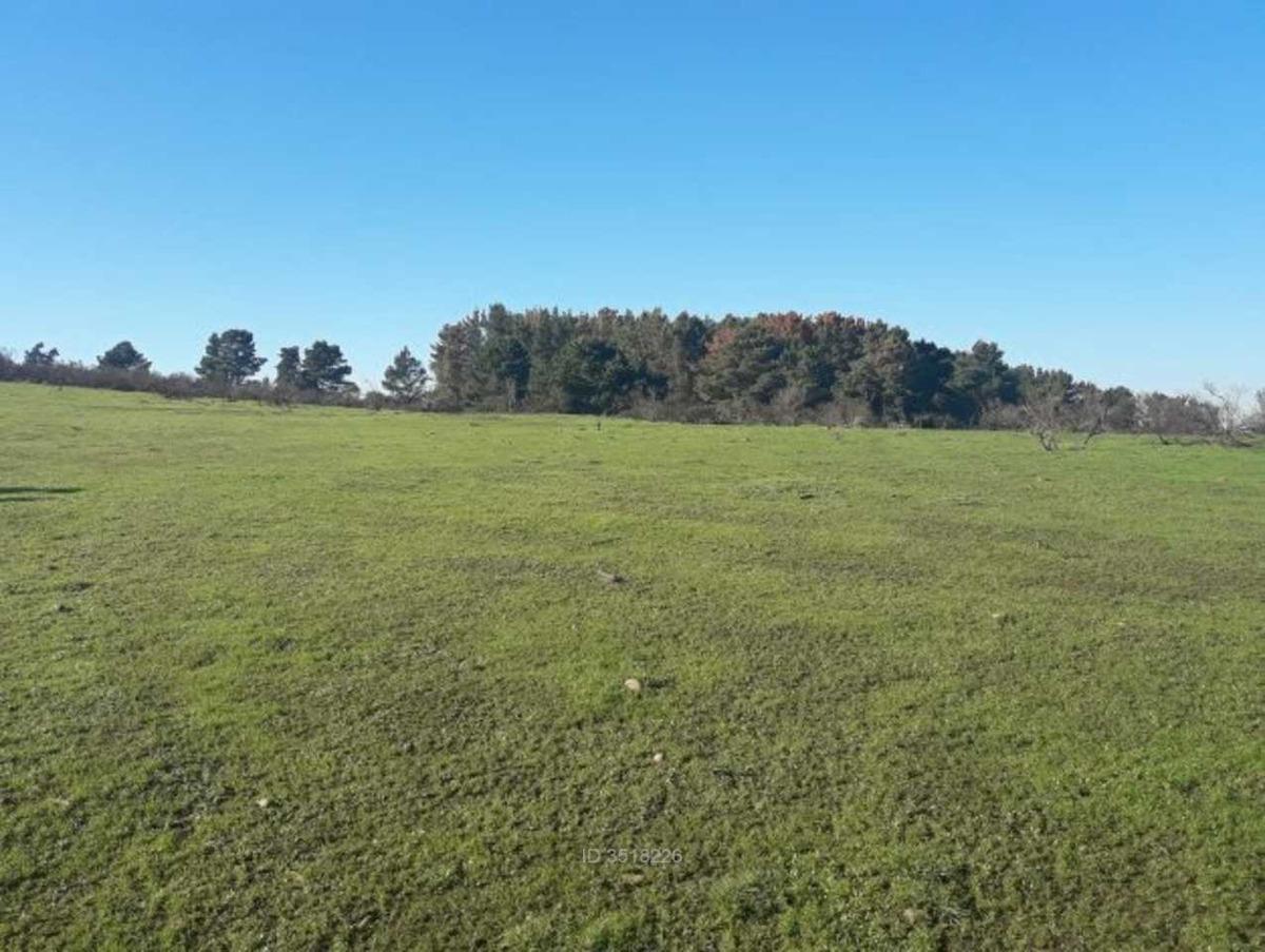 18 hectáreas, venta. empresas relacionad