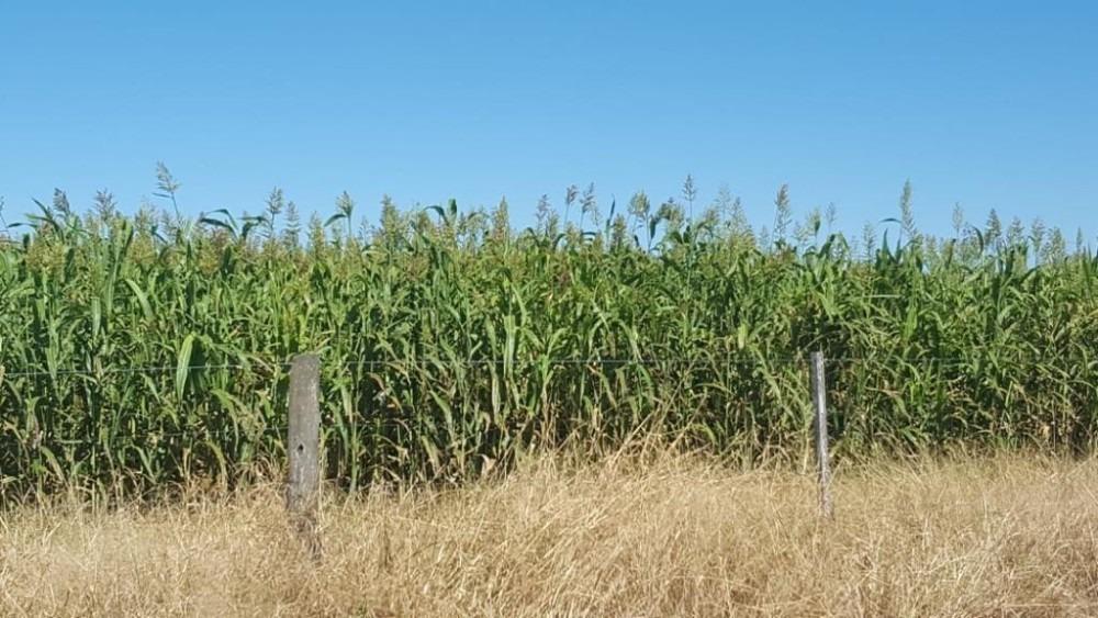 1886 hectáreas agrícolas / ganaderas. ( noetinger cordoba )