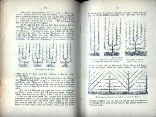 1906 - pomares - manual prático - 571 ilustrações - raro