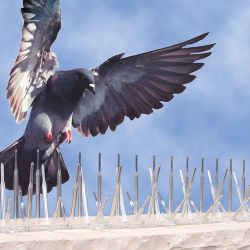 1m pinches pinchos repelente visual ahuyenta palomas pajaros - policarbonato resistente sol y lluvia