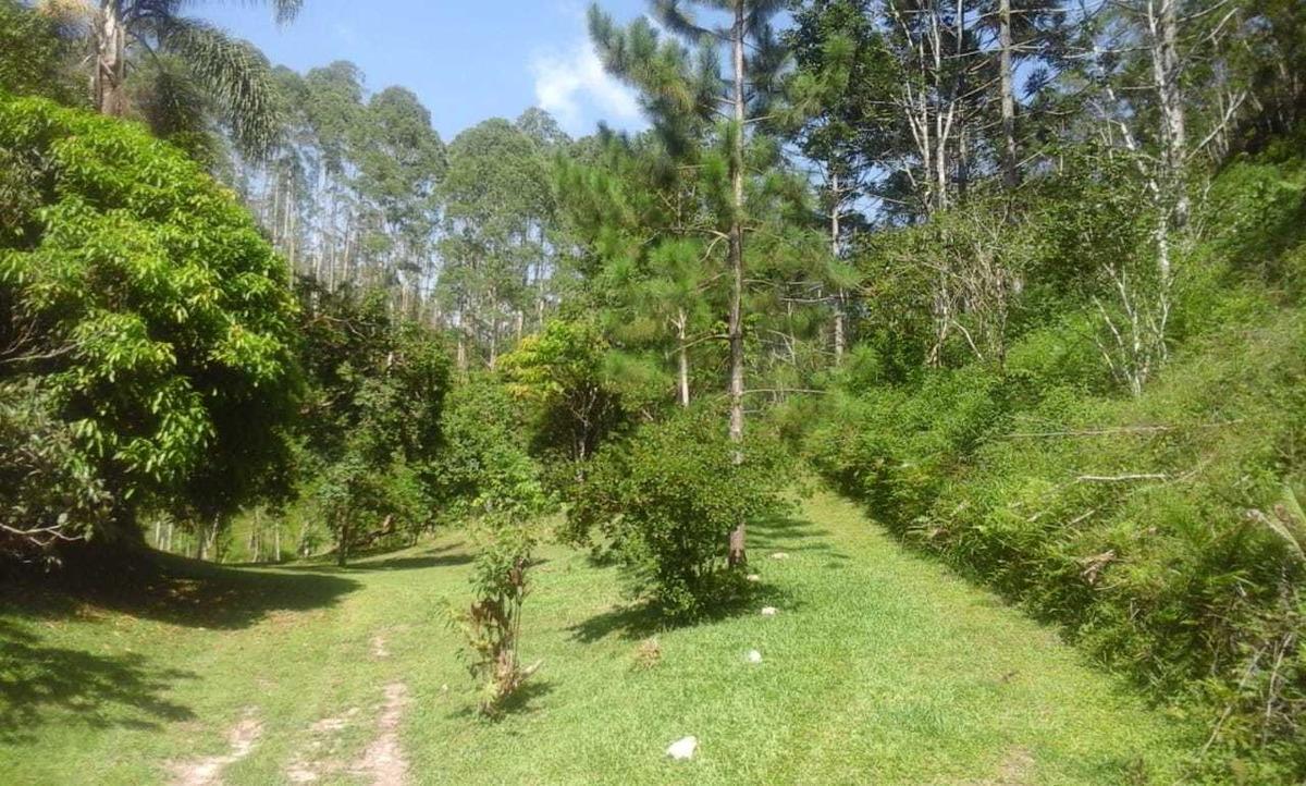 2 alqueires plantação de eucalipto lago ótima localização
