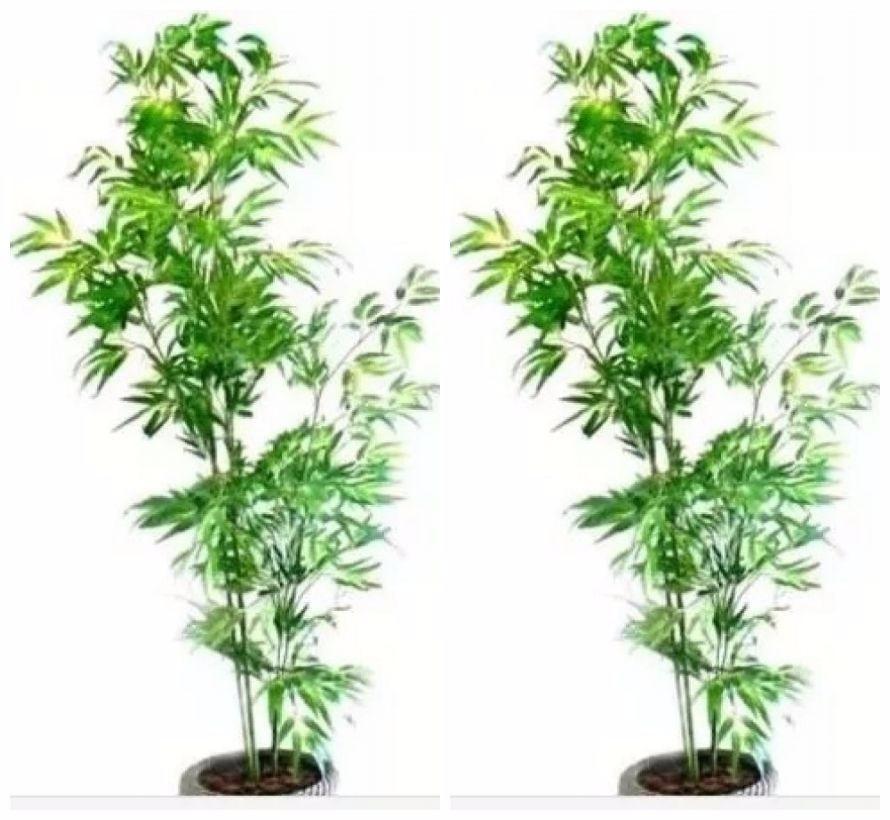2 Bambu Reto 190cm Plantas Artificiais Decoração - 2x 587556 - R ...