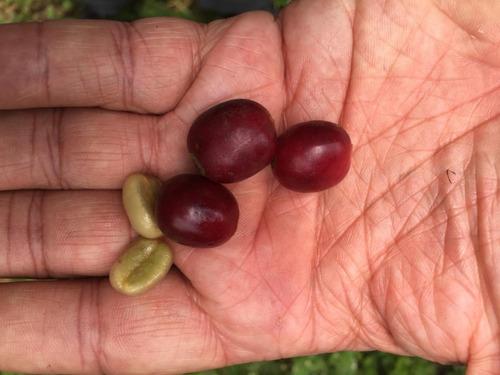 2 kg café grano colombia & etiopía tueste hoy 45% off