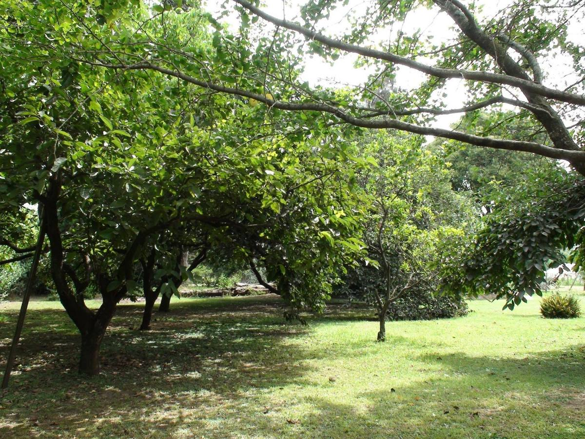 2 lotes forestados aptos credito o financiacion 70% vh75